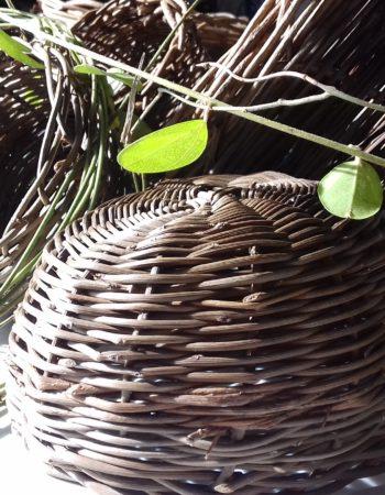 Brin de Bambou