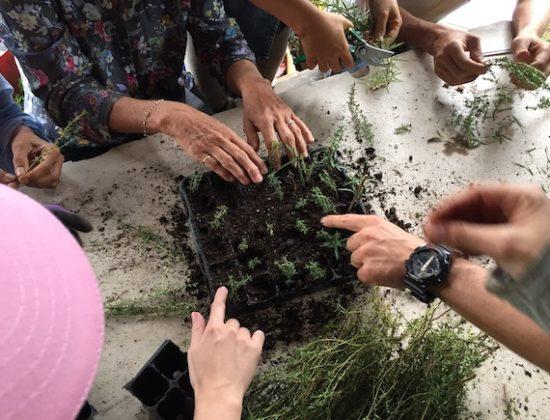 Ecole du Jardin planétaire