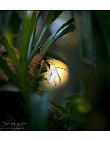 Photographe Mélanie Morand